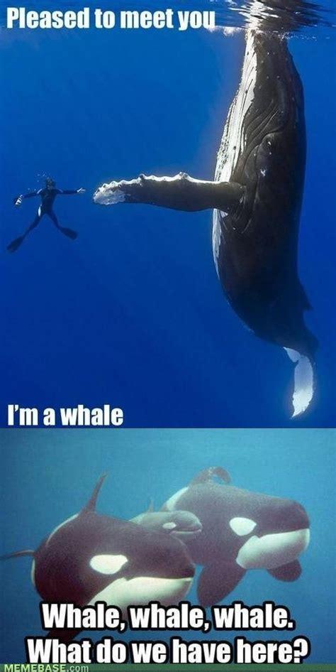 Oh Whale Meme - memebase 107 sharenator