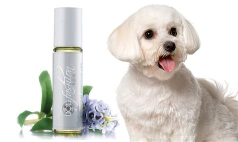 calming essential oils for dogs calming essential oils for dogs groupon goods