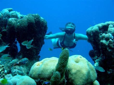 bonaire dive bonaire scuba diving holidays with sportif dive holidays