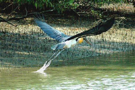 sundarbantours travel to nature with care sundarban bangladesh amazing tour in nature deshghuri com
