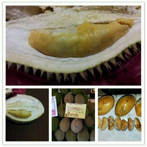 Benih Durian Udang Merah durian udang merah segalanya tentang tumbuhan