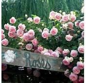 17 Best Images About  ROSE COTTAGE On Pinterest