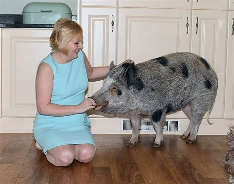 Cmon Ladiesbe Pigs by Pig Owning On How They Couldn T Be Without Their Pet