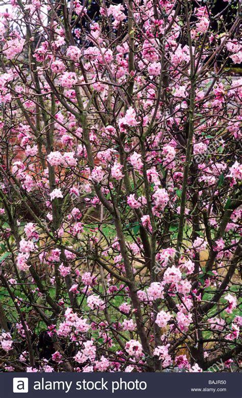 piante da giardino con fiori profumati fiori profumati da giardino fiori di azalea with fiori