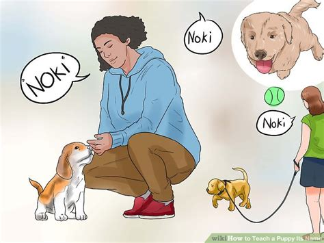 how to teach a puppy its name how to teach a puppy its name 12 steps with pictures wikihow