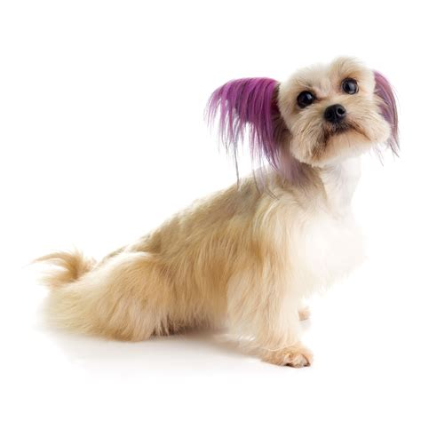 hair dye for dogs top performance hair dye gels baxterboo