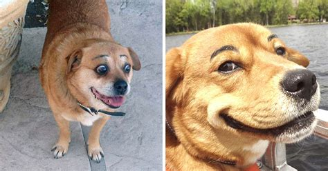 do dogs eyebrows 28 hilarious photos of dogs with eyebrows that will make your day so much better