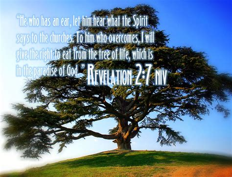 tree in bible 2012 02 12 free christian wallpapers