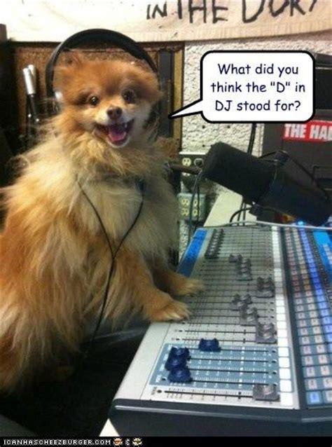 Baby Headphones Meme - dog meme with headsets headphones loldogs n cute