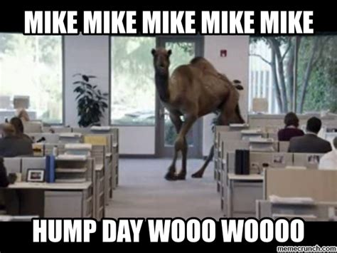 Camel Hump Day Meme - guess what day it is camel new style for 2016 2017