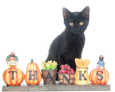 Thanks Aunties We Are The Cat In The Flickr by Thanksgiving Safety Tips For Your Pet The Animal Keeper