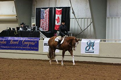 color breed congress photos and results from 2017 color breed congress equine