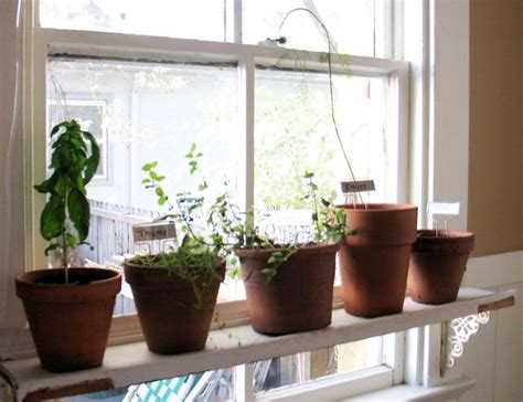 Small Window Plants Discover And Save Creative Ideas