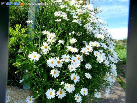 fiori a cespuglio fiori a giugno fiori a cespuglio fiore roma finto