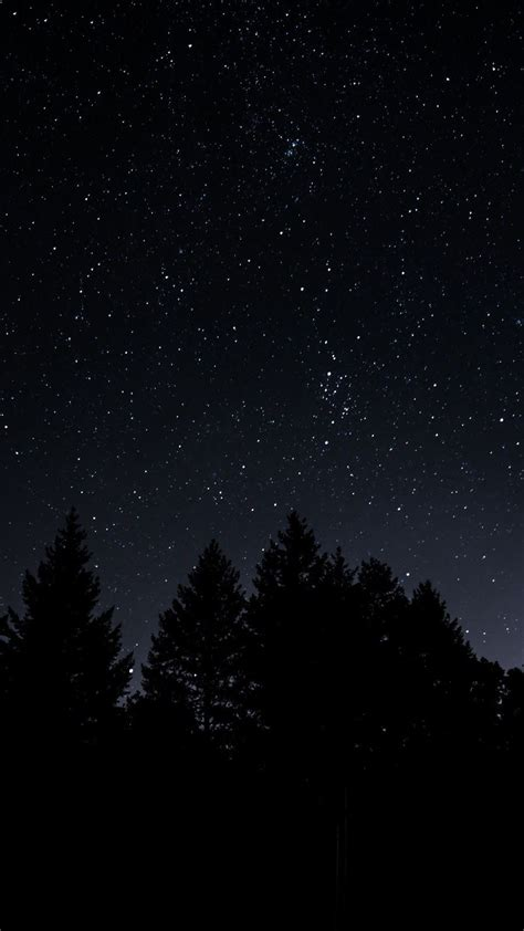 starry sky trees night sky   night sky