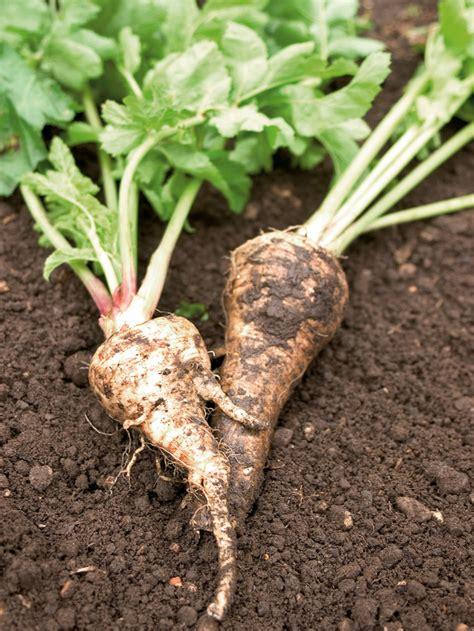 Growing Root Crops How Tos Diy Root Vegetable Garden