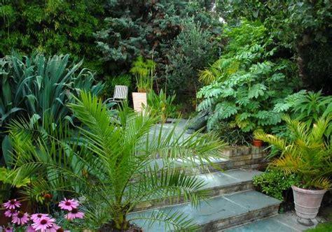 Exotic Patio Tropical Patio Plants