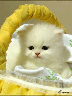 imagenes de gatitos llorando im 225 genes perritos y gatitos tiernos y divertidos movimiento