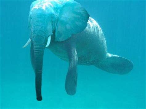 imagenes de animales transgenicos just like an elephant and a manatee