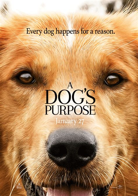 s dogs review a dog s purpose 2017