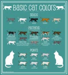 cat color patterns cat color chart by paintbean on deviantart