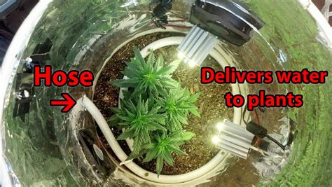 space buckets start growing marijuana   grow