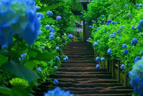 fiori hd sfondo hd fiori di primavera mondo sfondi