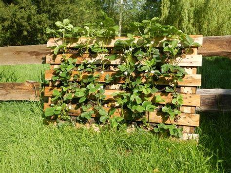 bepflanzter zaun aus euro paletten gr 252 nzeuch pinterest