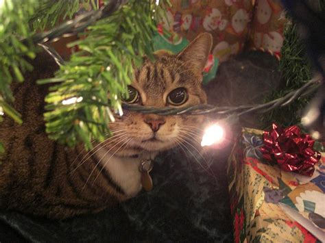 how do i keep cat away from christmas tree feral cat