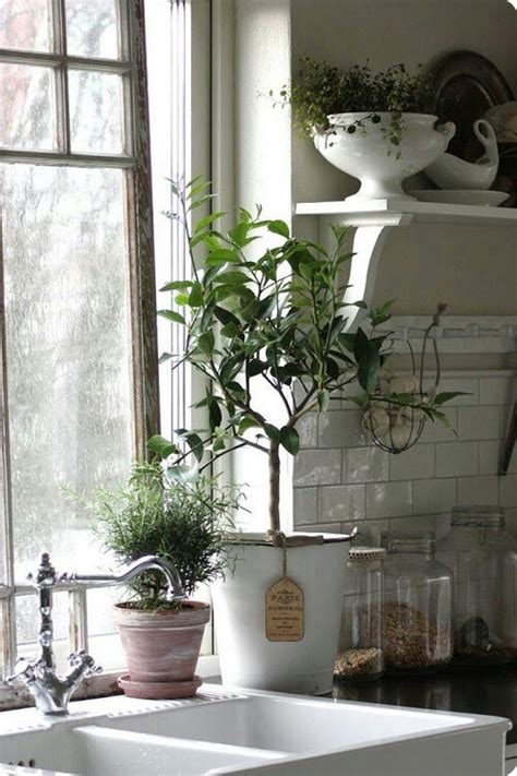 plants in the kitchen kitchen plants home decor ideas pinterest