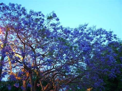 pin blue tree on pinterest