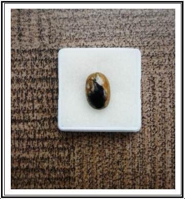 Batu Motif Fosil Kayu batu akik indonesia
