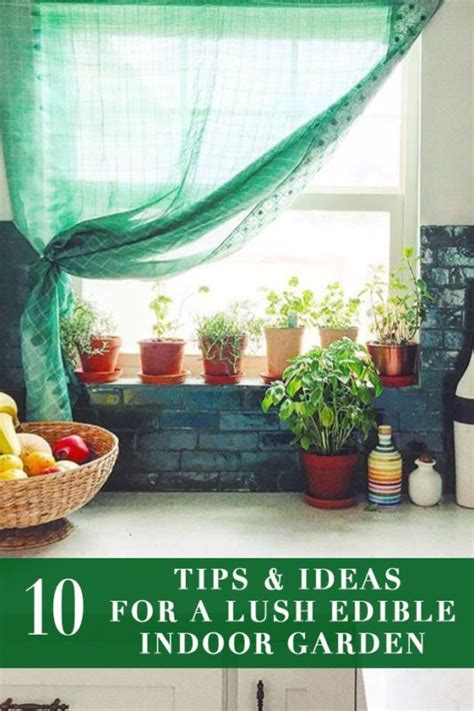 a guide to indoor gardening cnn 17 best images about planties on pinterest planters