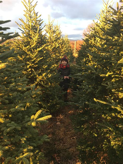 best place to cut your own christmas tree in va best 28 cut your own tree ny where to cut your own trees news things