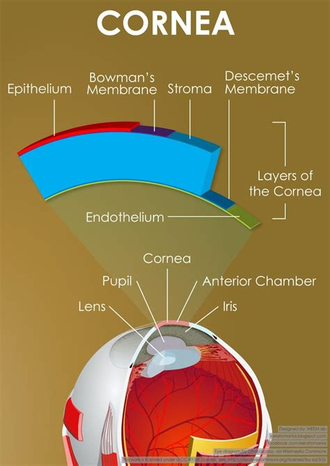 diagram of cornea pin by piedmont eye care on facts about your