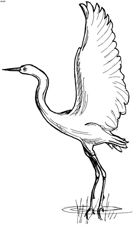 coloring pages of water birds 17 best images about patterns stencils etc 2 on