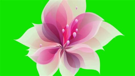 flower blooming animated flower blooming green screen