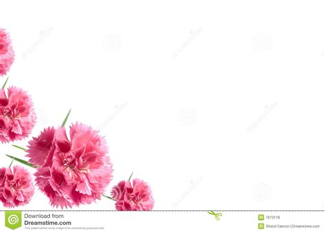 flowers for card flowers card background pink carnations royalty