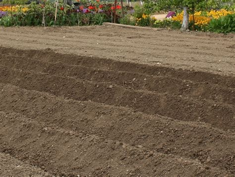 Garden Tilling Service by Easy Garden Changes Tip 6 Rethink Tilling Self Sufficiency
