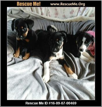 forever paws puppy rescue indiana indiana rescue adoptions rescueme org