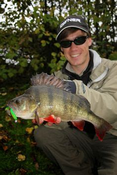 river thames record zander 1000 images about river thames perch and zander fishing