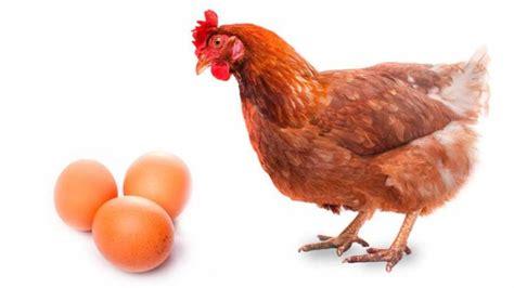 imagenes vintage gallinas 191 qu 233 fue antes el huevo o la gallina cient 237 ficos