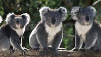 Australian Animals Facts