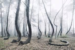 Nature photography twisted trees crooked forest kilian schonberger 6