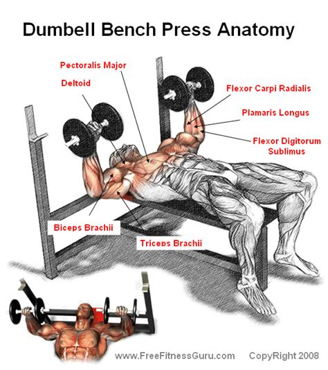 muscles worked by bench press chest gymhard