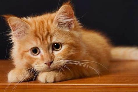 imagenes de amor de gatitos tristes tiernas im 225 genes de gatitos tristes imagenes de tristeza