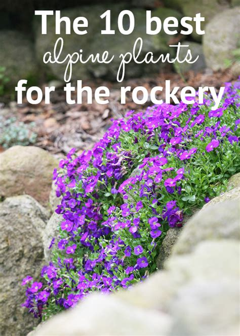 Rockery Plants Top 10 Plants For An Alpine Rock Garden Plants For A Rock Garden