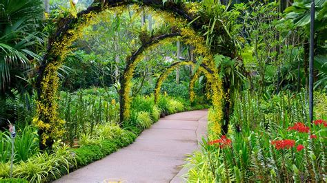 Botanical Gardens Singapore Singapore Botanic Gardens In Singapore Expedia