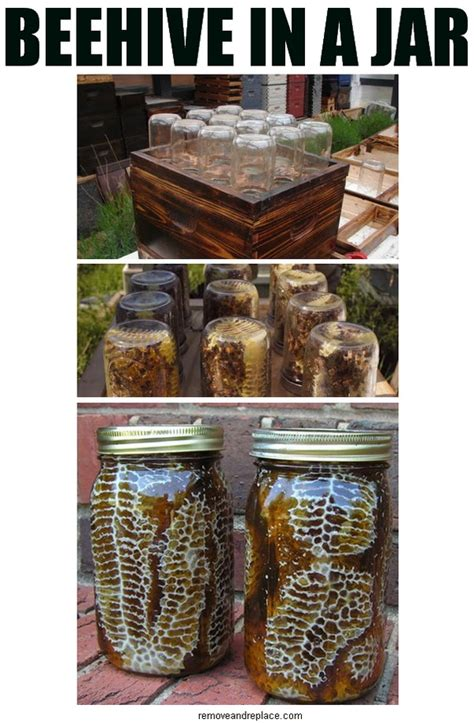 how to have a beehive in your backyard diy beehive in a jar fresh honey in your backyard mrs happy homemaker