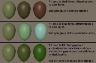 chicken egg colors olive eggers seven trees farm